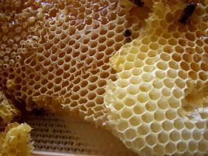 Пчелиный воск.